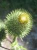 Непростой цветок