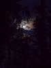 Полночь, озеро, Луна. Неподвижность, тишина.