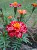 Цветы, умытые дождём