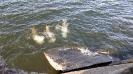 Русалы и русалки